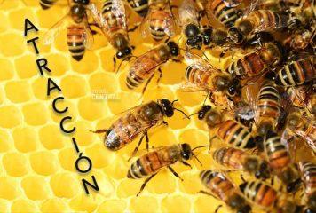Atrae clientes como la miel a las abejas